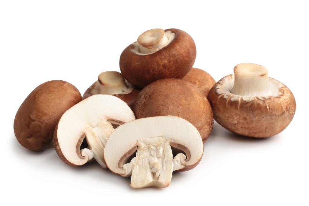 خاصیت درمانی قارچ