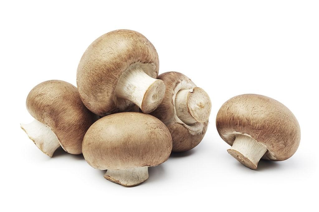 قارچ چه خواصی دارد ؟