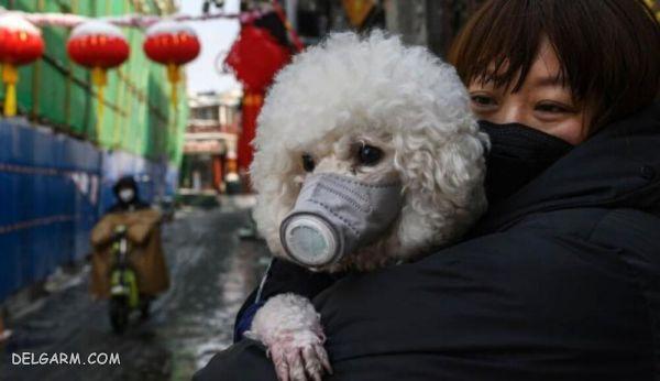 آیا کرونا از حیوانات خانگی منتقل می شود