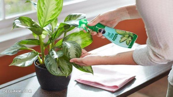 آیا گل و گیاه ویروس کرونا را انتقال می دهند