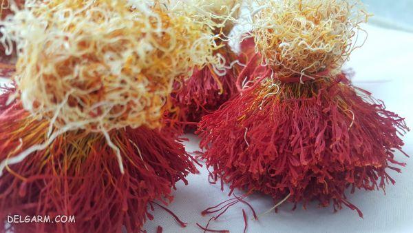 ریشه زعفران چیست / خواص ریشه زعفران