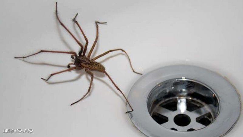 ترس از عنکبوت