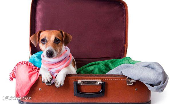 جابجایی حیوانات با هواپیما