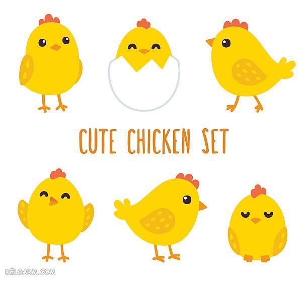راههای تشخیص جنسیت نر یا ماده بودن جوجه مرغ
