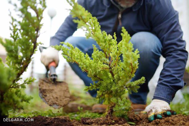 دکلمه روز درختکاری