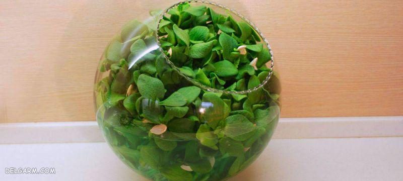 سبزه عید با تخم کدو
