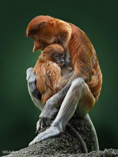 زیباترین عکس های حیوانات