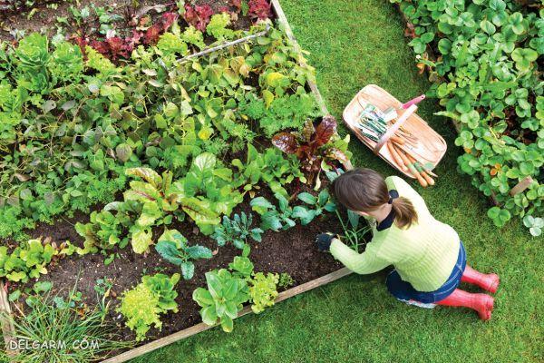 کاشت سبزی خوردن در منزل