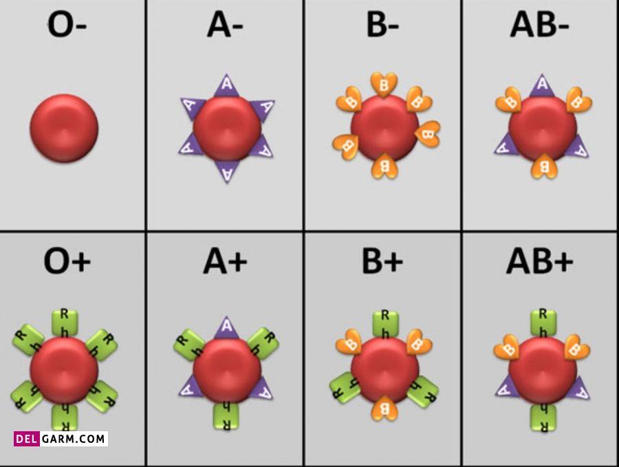 - روانشناسی گروه خونی ab روانشناسی گروه خونی b+ شخصیت گروه خونی a+ روانشناسی گروه خونی ab+