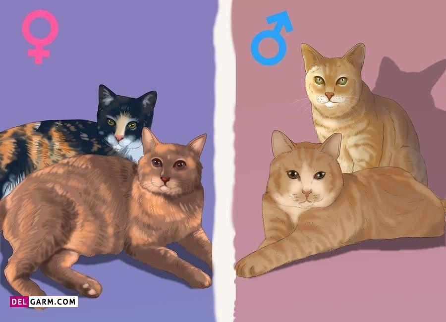 تشخیص جنسیت گربه از روی رنگ