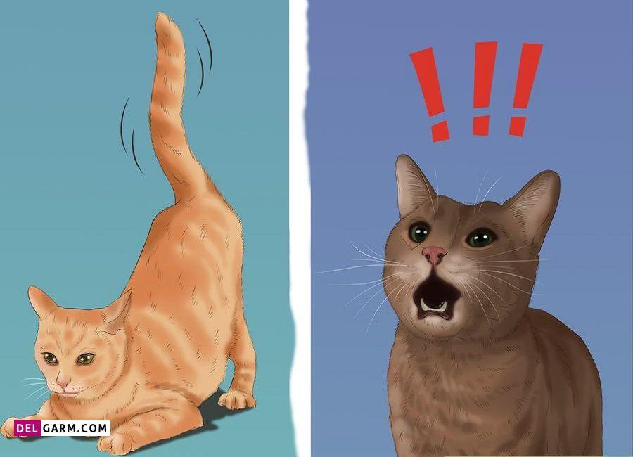 تشخیص با توجه به نشانه های گربه های ماده