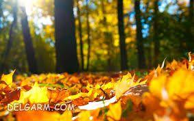 شعر در وصف فصل خزان و پاییز