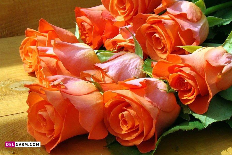 گل رز نشانه چیست