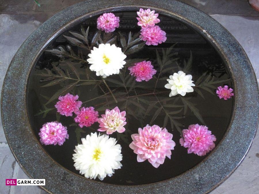گل نیلوفر نشانه چیست
