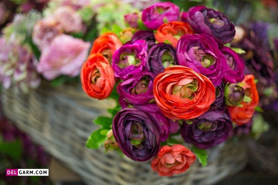 گل آلاله نشانه چیست