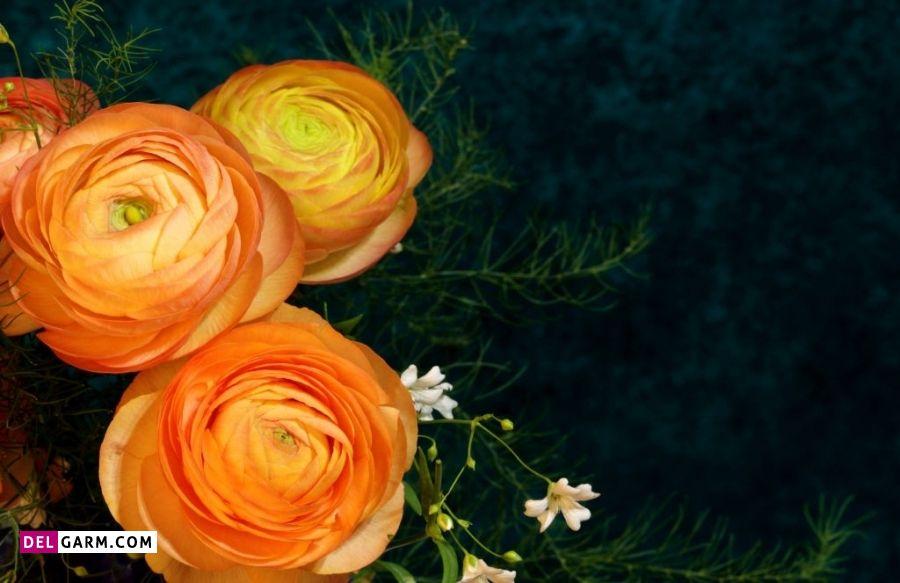 گل آلاله نماد چیست