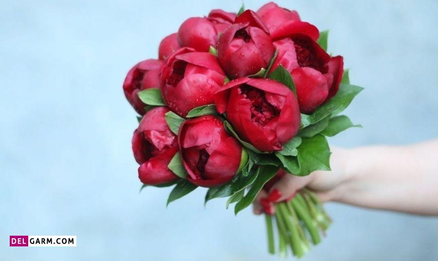 نماد گل پیونی چیست