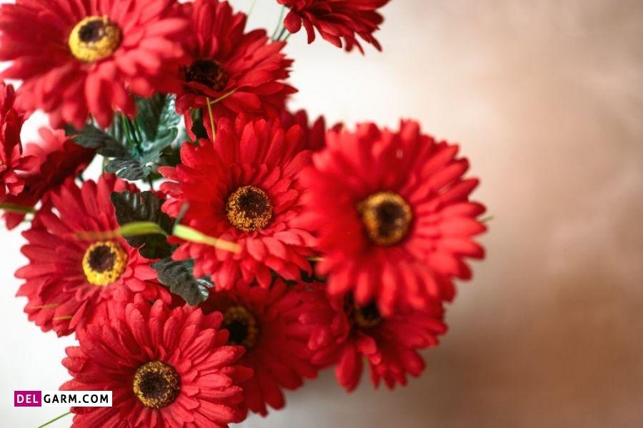 نماد گل ژربرای قرمز