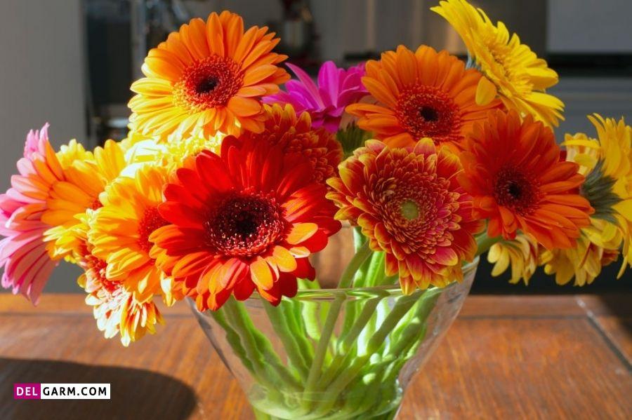 گل ژربرا نماد چیست