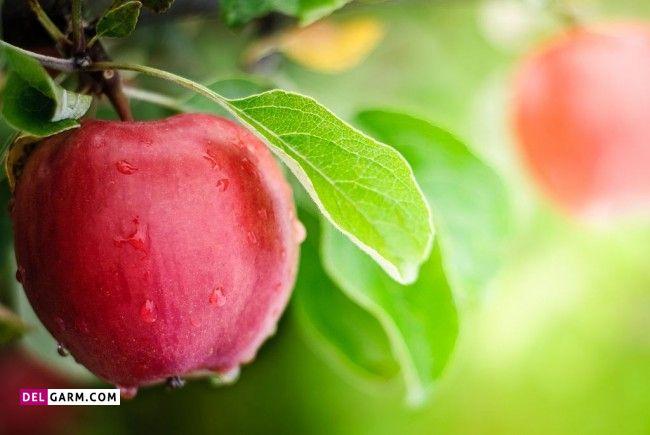 طبع سیب چیست