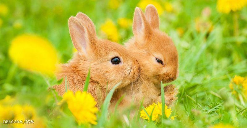 اسم برای خرگوش