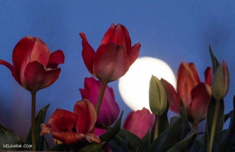 دانلود عکس گل
