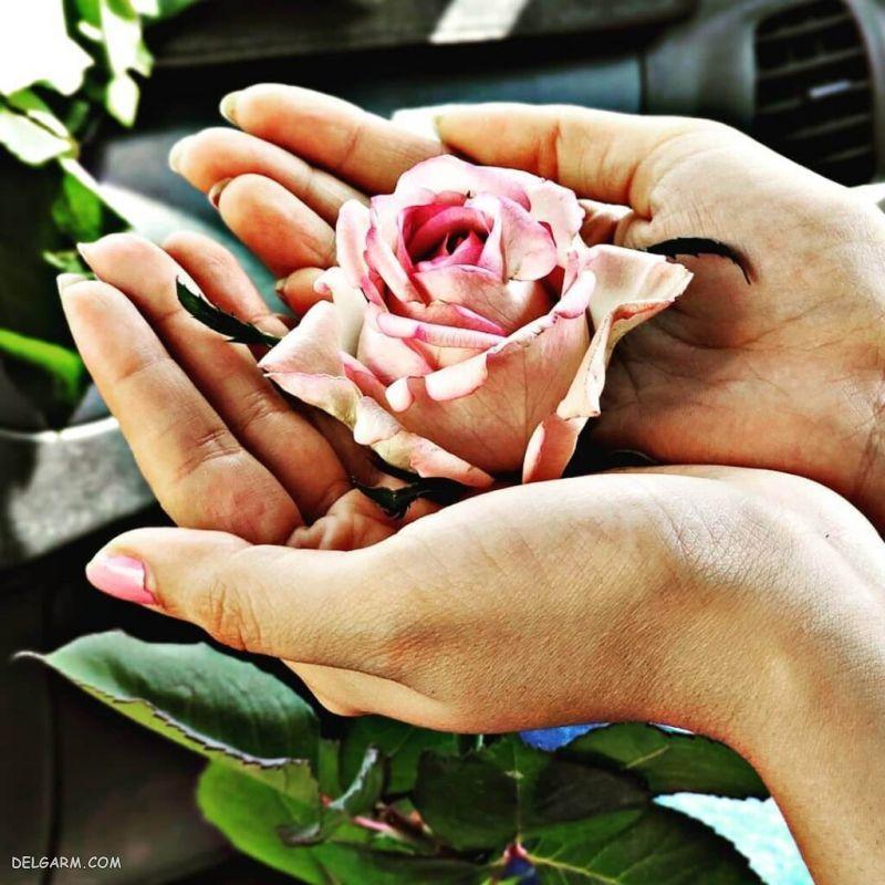عکس گل در دست