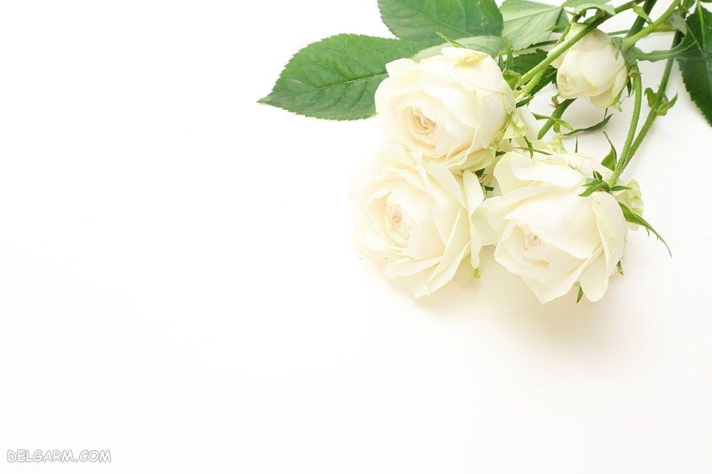 عکس تصویر زمینه گل