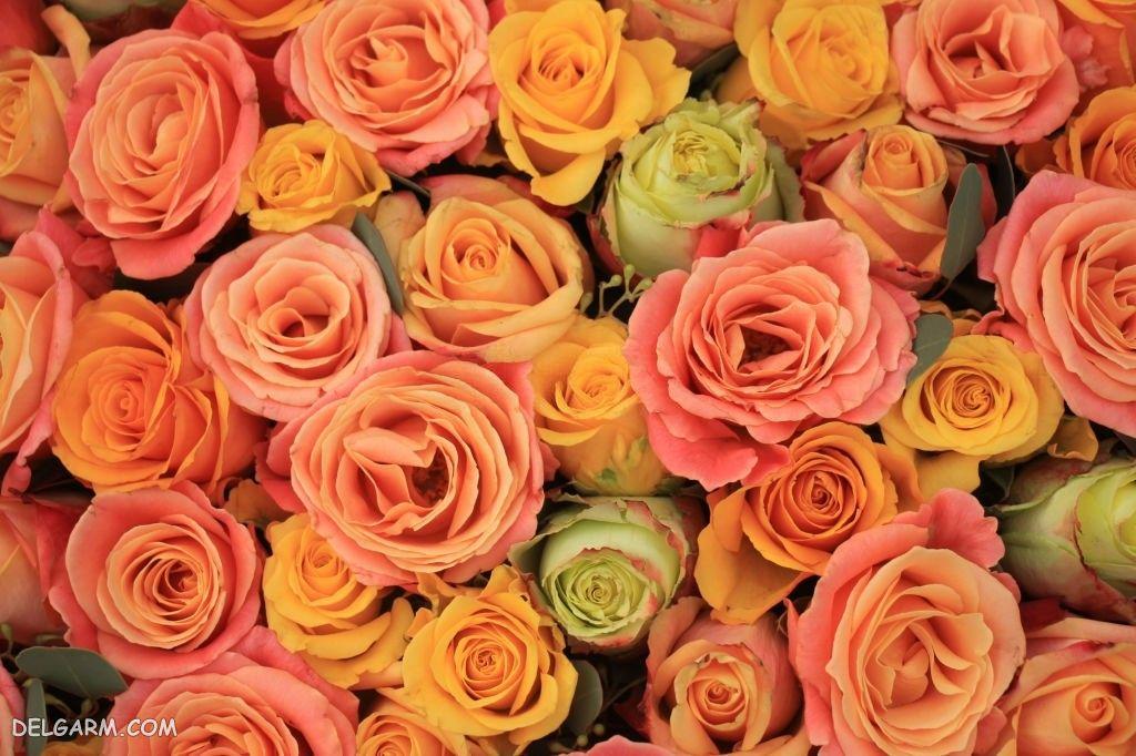 عگس گل برای پروفایل