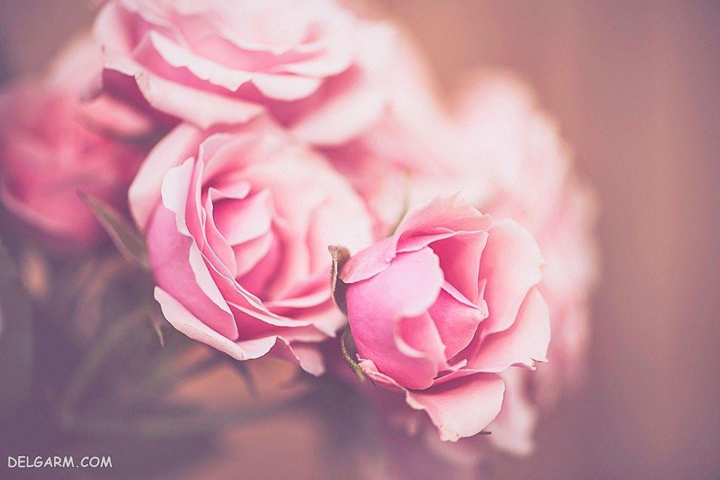 عکس گل برای پس زمینه