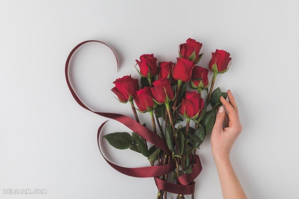 عکس گل رز زیبا برای پروفایل