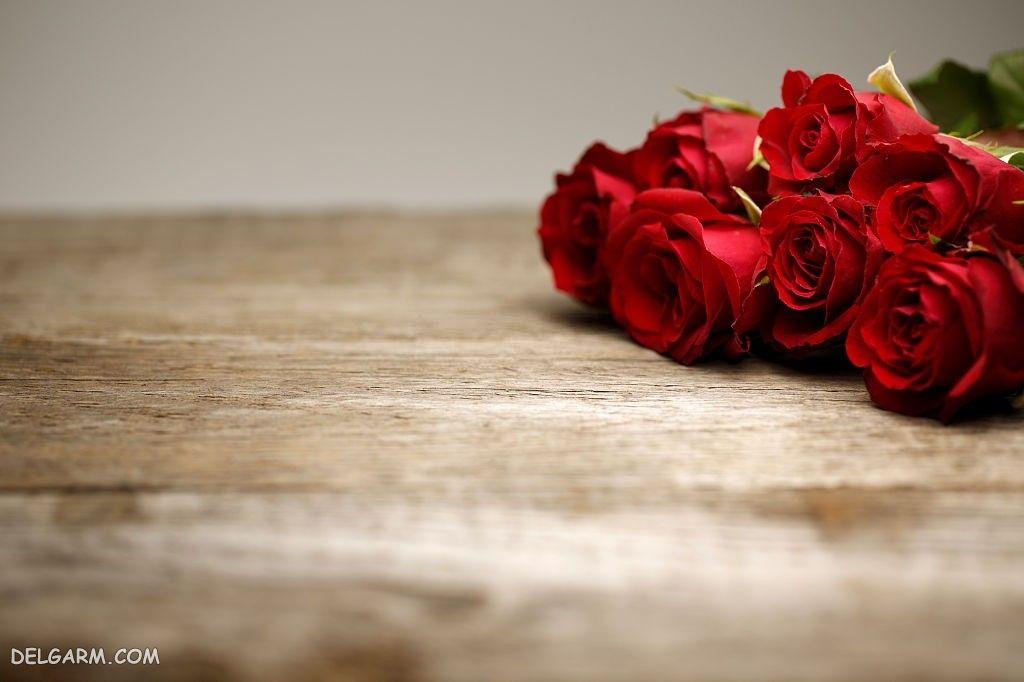عکس گل رز برای استوری