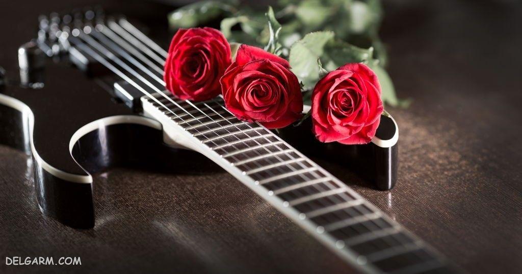 عکس گل رز دو رنگ