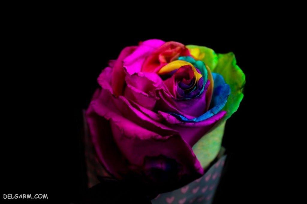 عکس گل رز برای بگ گراند لپ تاپ