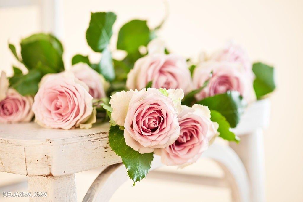 عکس گل رز برای والپیپر گوشی