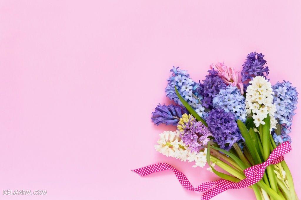 عکس از گل سنبل