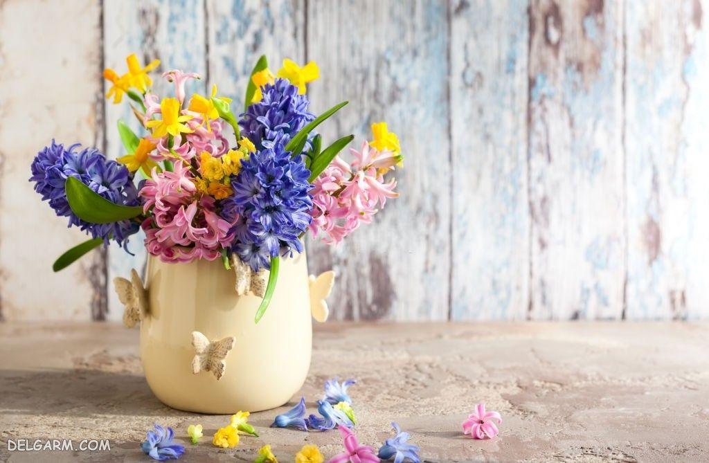 دانلود عکس گل سنبل