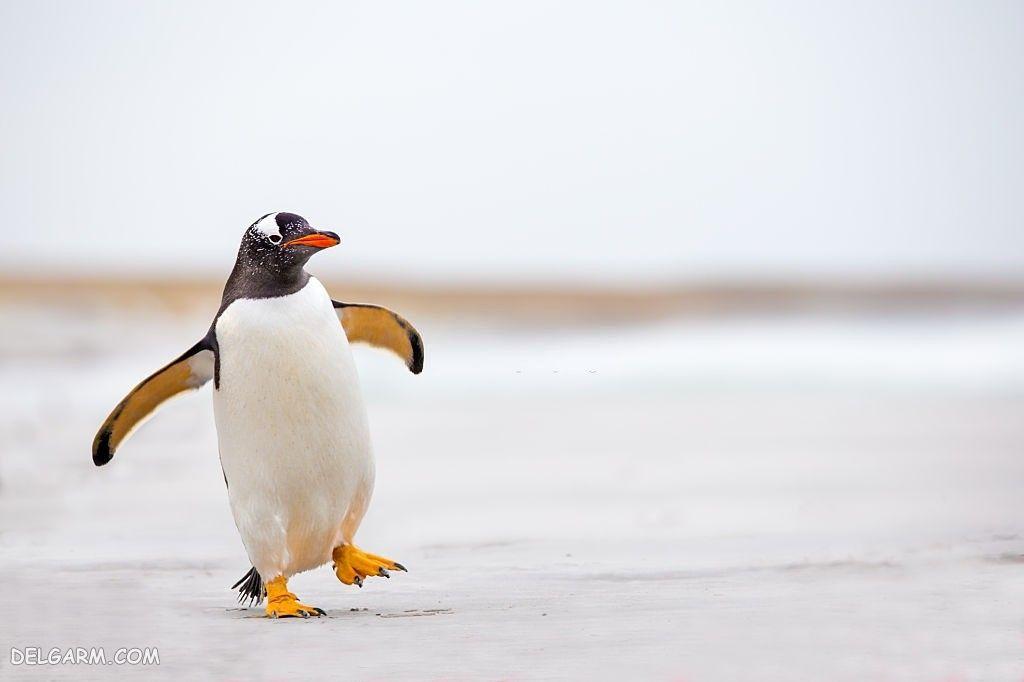 دانلود عکس پنگوئن