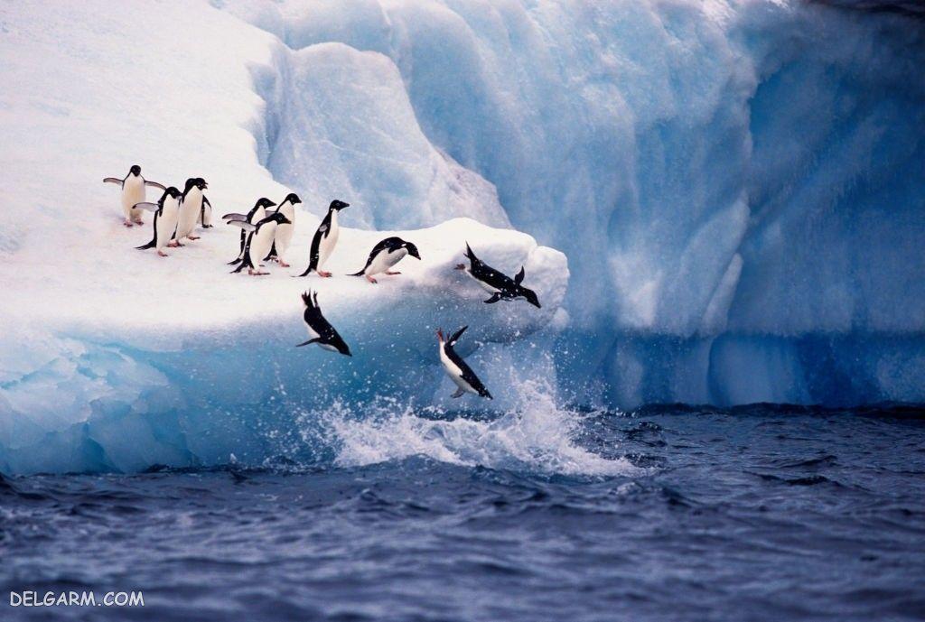 عکس پنگوئن خنده دار