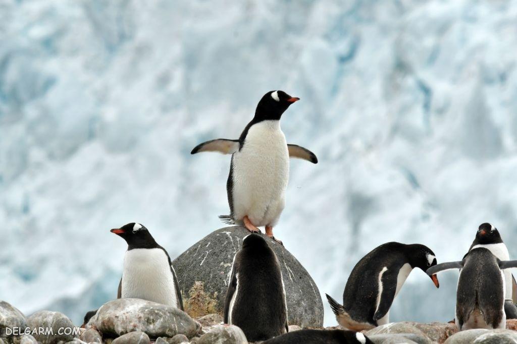 عکس پنگوئن فانتزی