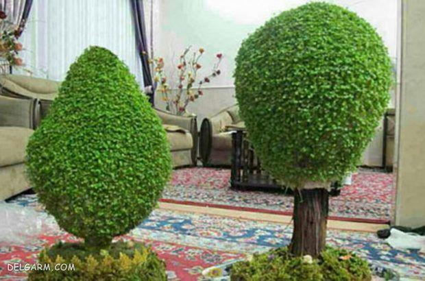 آموزش درست کردن سبزه عید