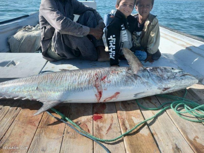 عکس/ شکار ماهی 4 میلیون تومانی توسط صیاد ایرانی!