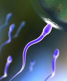 اطلاعات مورد نیاز شما در باره اسپرم