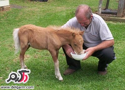 افزایش قد کره اسب