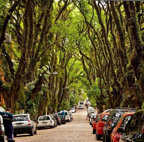 زیباترین خیابان جهان + عکس
