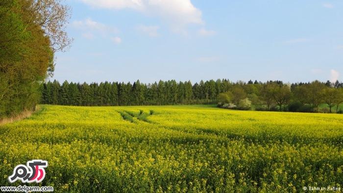 طبیعت بکر روستایی کوچک در غرب آلمان
