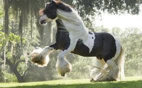 قیمت اسب نژاد شایر
