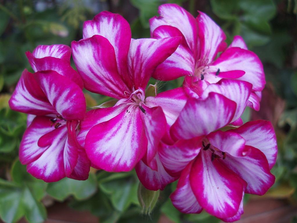 تصاویر گلهای زیبای طبیعی