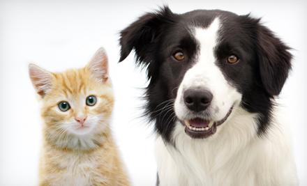 سگ یا گربه