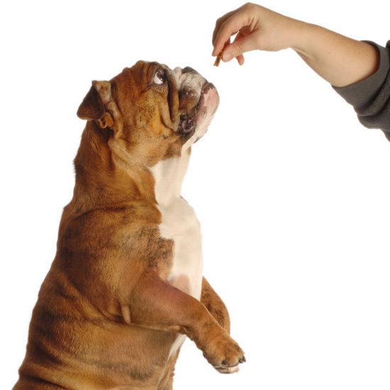 9 روش برای تعلیم سگ